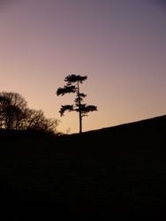 Lonesome Pine!
