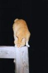 The Bing Kitty