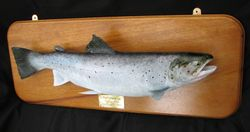 Sea trout on hardwood plaque, solid brass name plate