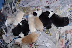 Mischa's new babies