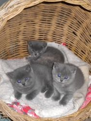 Gemma and siblings ready for a snooze, 7 weeks old