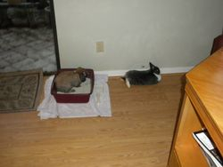 Playing in the cat's litter box