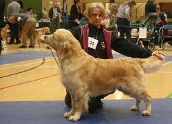 Winner of Sp Working Gundog (Dog)