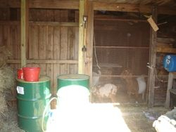 The Goat feed shed