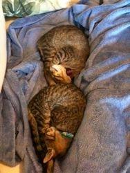 And Still Cuddling!!!