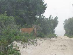 2 deer in the cedars