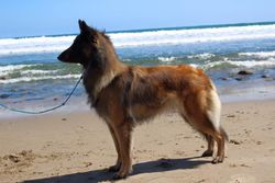 Maizie on the Beach