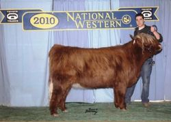 Vermillion as reserve champ yearling in Denver