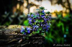 Blue flower on woods