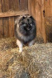 Loki Barn hunting