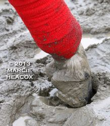 Hoof in the Mud