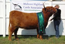 Grand Champion Heifer CBS Wendy's Girl