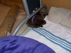 Mauve sleeps on