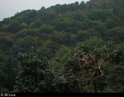 Monkeys & the forest