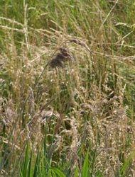 Spot the bird!