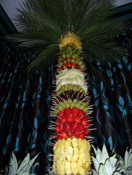 Fruit palm tree Hire Sheffield