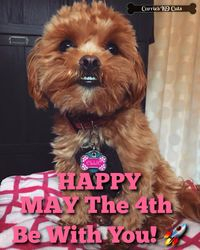 HAPPY MAY THE 4th BE WITH U! Little Ellbacca