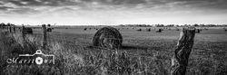 Hay Field B&W Long