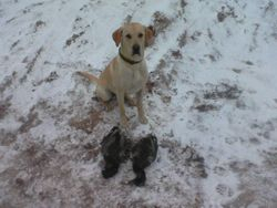 9-month-old buddy after a successful hunt