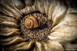 Die Schnecke / The Snail