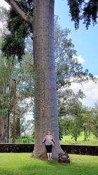 To sie nazywa drzewo!