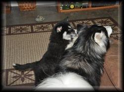 Zorro & Jetta