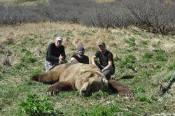 Paul Hugentoler's Bear 2014