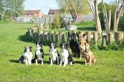 BDTS Dog Team