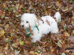 Bina in the leaves