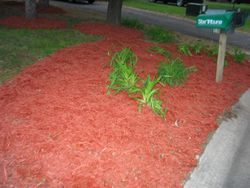 After - New Mulch Bed