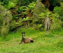 Foal in New Zealand Bush