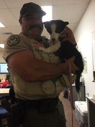 Deputy Vince & K9 Puppy Fly
