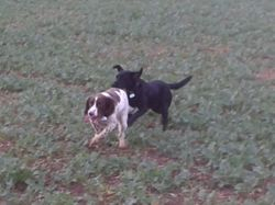 Enjoying a run!