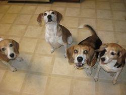 Maggie, Gabby, Henry, Daisy