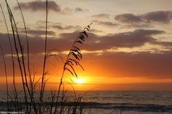 Sea Oat Sunrise