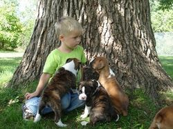 Brodey with puppies