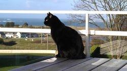 Terrasse Ferienhaus 1 mit Katze