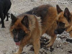 Tyson & Oscar