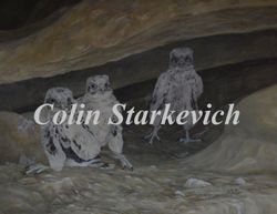 "Prairie Falcon Chicks (14 by 18"" acrylic on panel) $600.00"