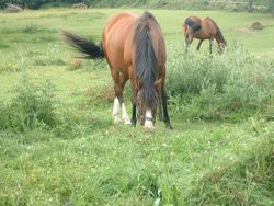 our horses out in the field