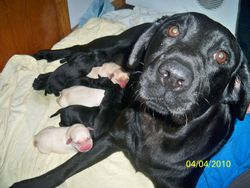 Polly and her puppies