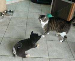 kennismaken met de kat