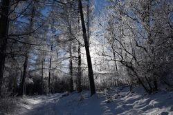 Magie dans les bois
