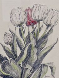 One Ted Tulip
