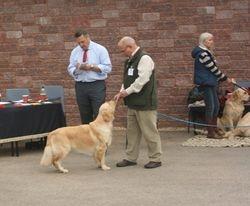Winner of Junior Dog