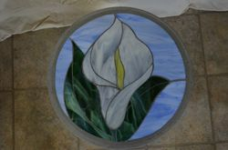 Cala Lily II (second one)