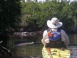 Everglades - alligators