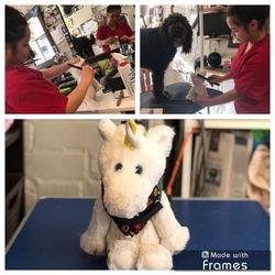 Yulia Brings Agnes & Calvin for Grooming!