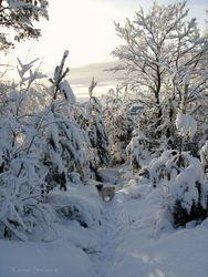 A lovely winterday 12.01.2011