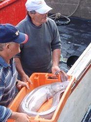 The boat unloads its catch